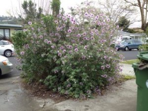 tree mallow plot